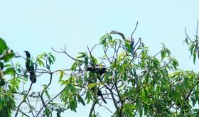 Kumarakom Birdsanctuary