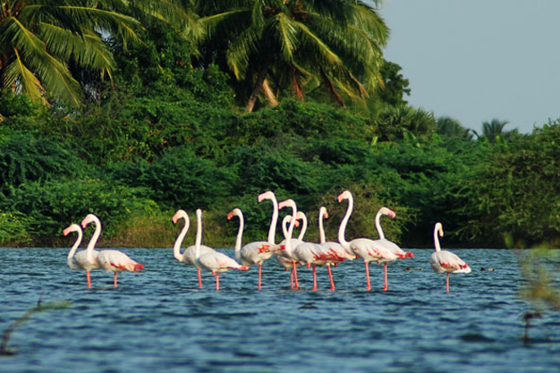 Kumarakom Elegant Holidays Package
