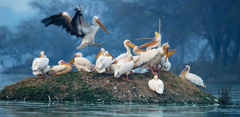 Kumarakom Bird Sanctuary